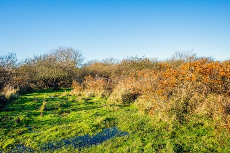 Nasser Dünenbereich mit orange Beeren auf blattlosem Sanddornbusch lizenzfreie stockfotografie