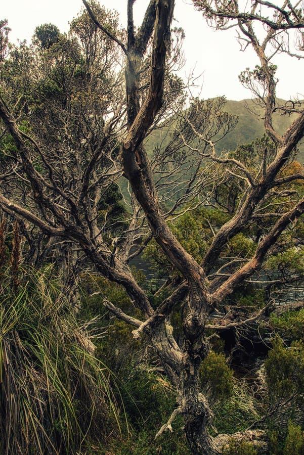 Nasser Eukalyptuswald lizenzfreies stockbild