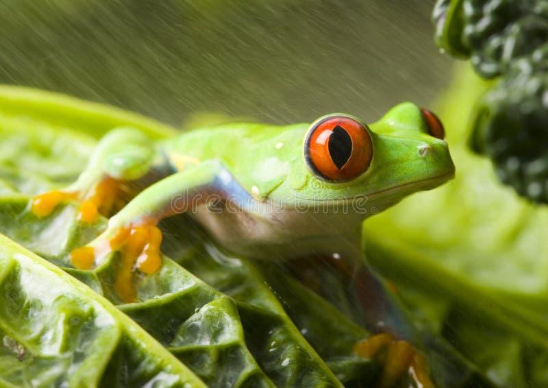 Nasser Frosch stockbilder