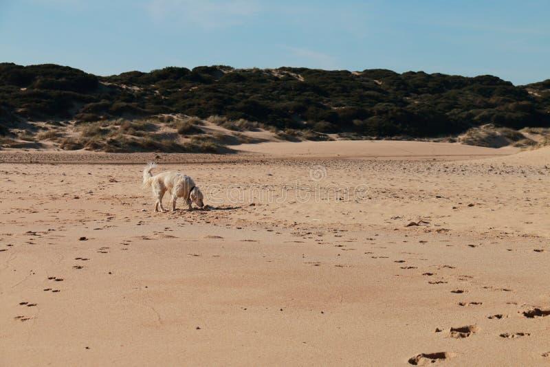 Nasser Hund auf dem Strand lizenzfreie stockbilder