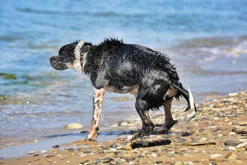 Nasser Hund auf dem Strand stockbild