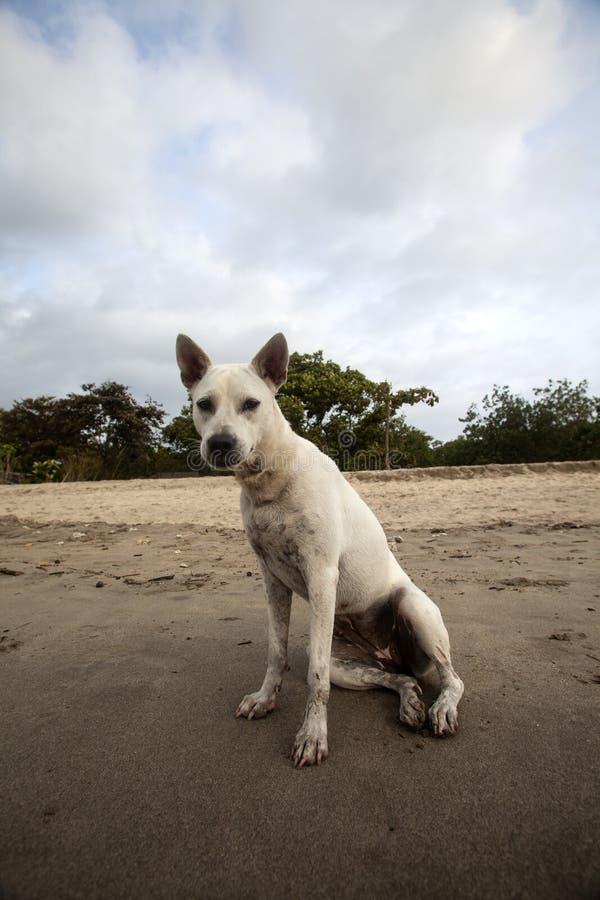 Nasser Hund auf Strand stockbilder