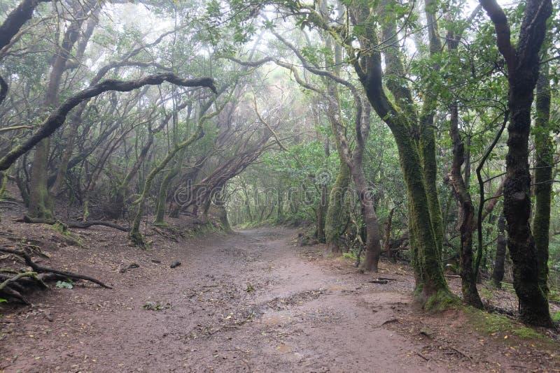 Nasser und schlammiger Wald in Anaga, Teneriffa SPANIEN stockfotos