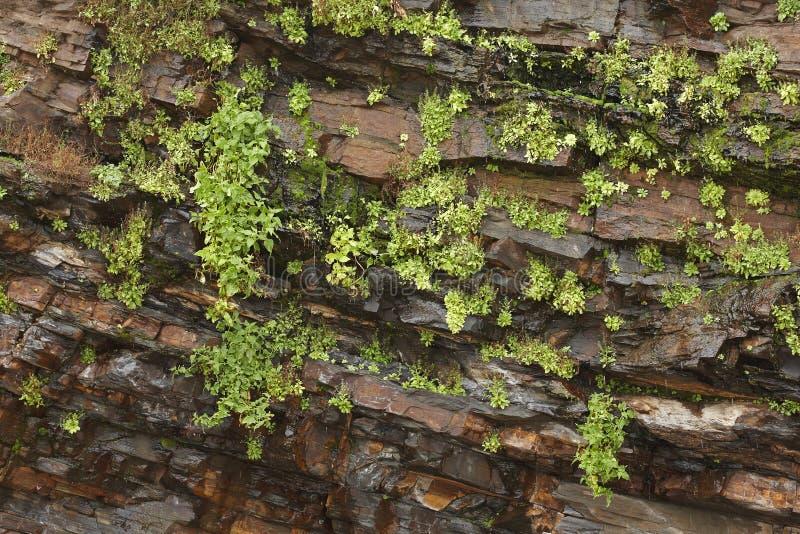 Nasses Felsengesicht mit Anlagen lizenzfreie stockbilder