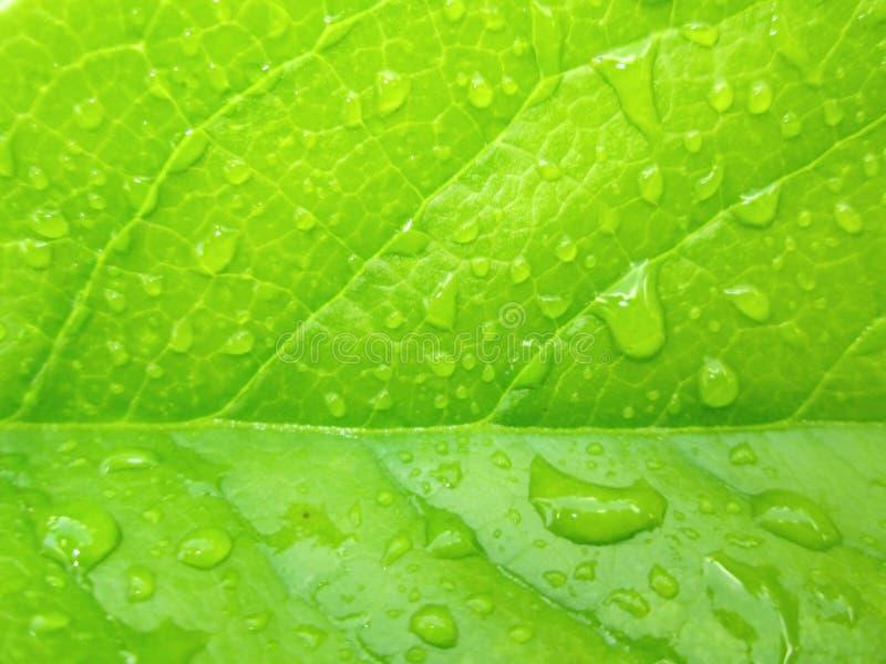 Nasses grünes Blatt lizenzfreie stockfotografie