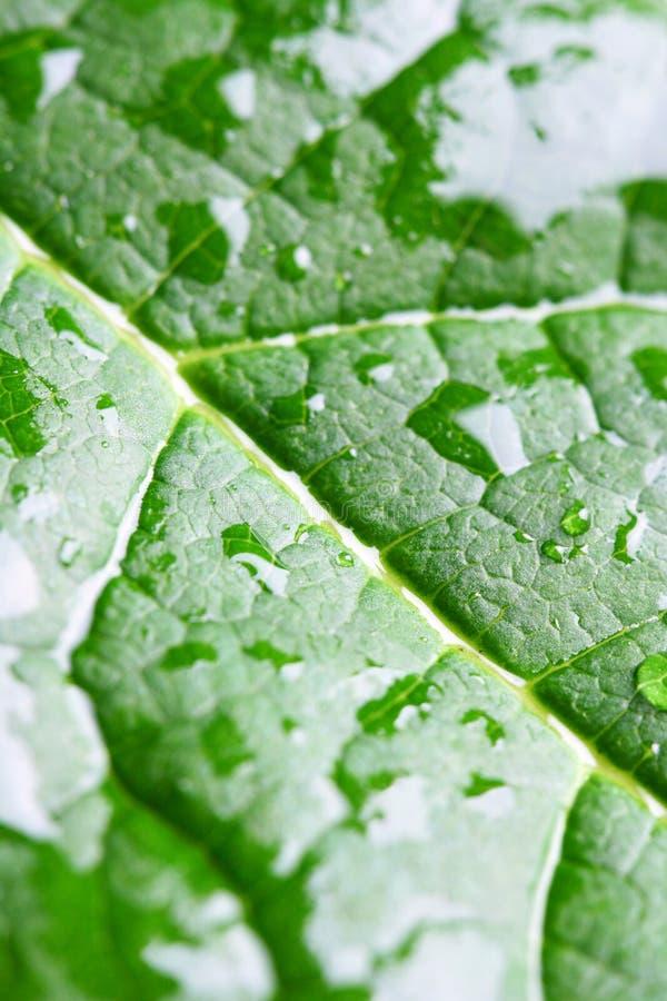 Nasses grünes Blattmakro stockfotografie