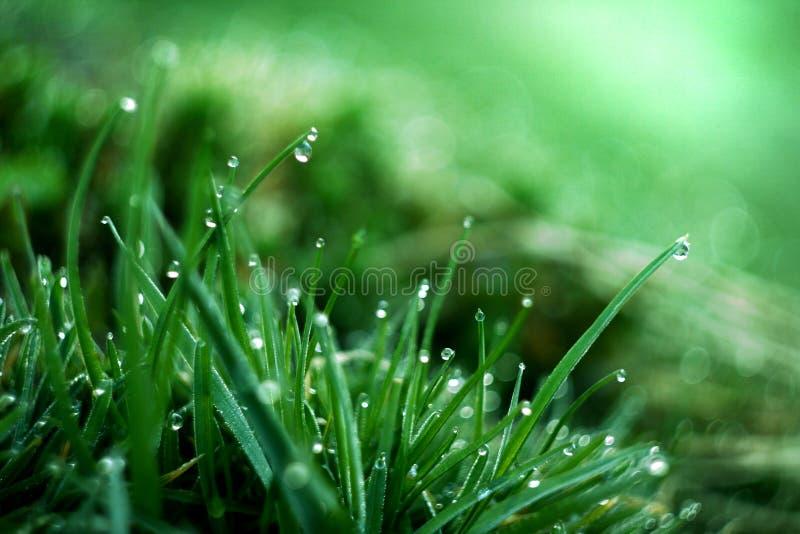 Nasses Gras lizenzfreies stockbild