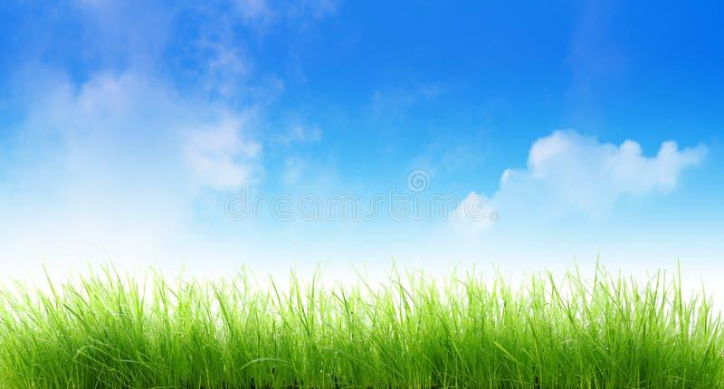Nasses Gras lizenzfreie stockbilder