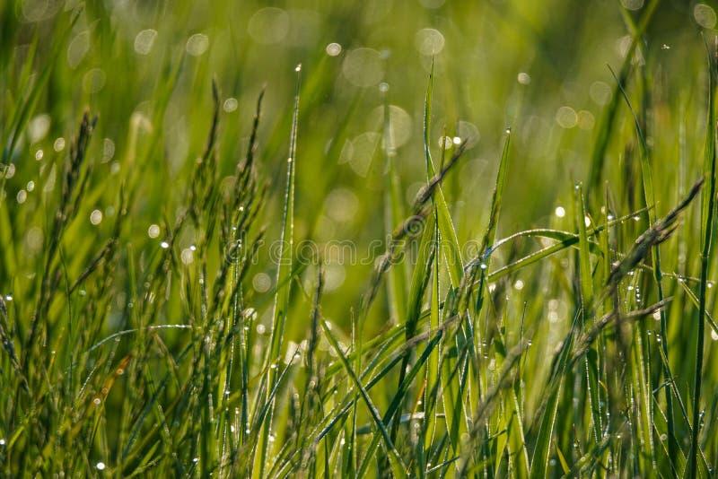 Nasses Gras nach Regen stockfotos