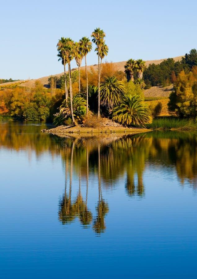 następna palma drzewo wody zdjęcia stock
