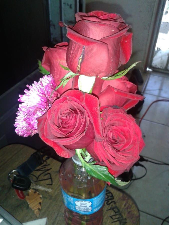 Następne dzień róże zdjęcia royalty free