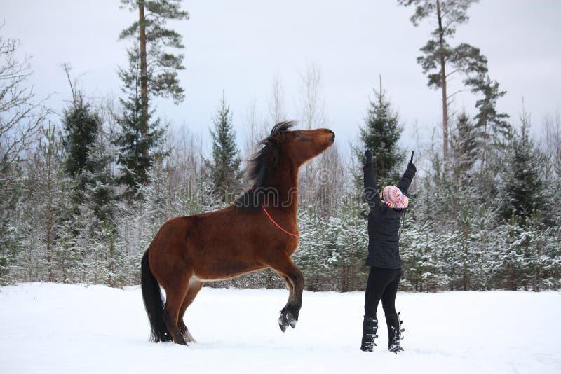 Nastolatek dziewczyny dominujący podpalany koń tyły zdjęcie stock