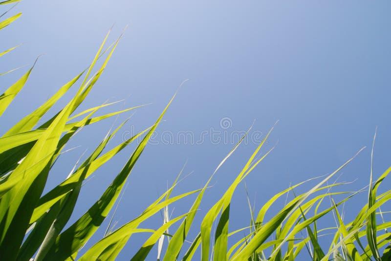 Nastri di Eco fotografie stock