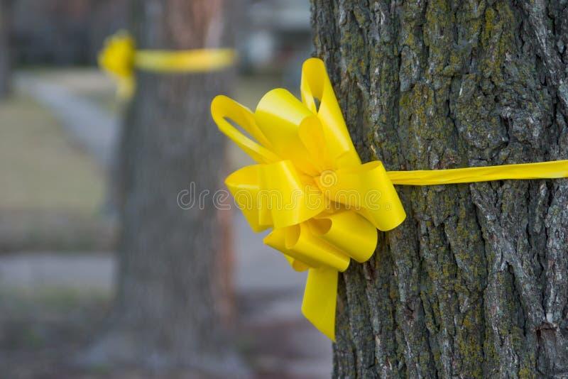 Nastro giallo intorno ad un vecchio albero di quercia 2 fotografia stock