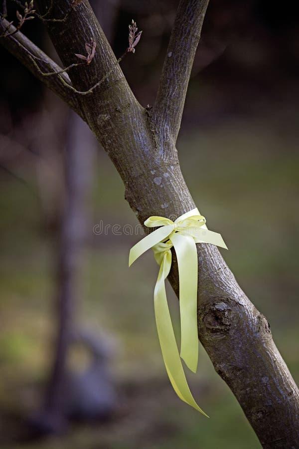 Nastro giallo legato intorno ad un albero immagini stock