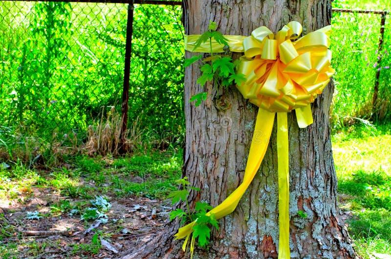 Nastro giallo legato intorno ad un albero di acero fotografie stock libere da diritti