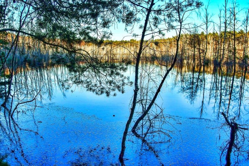 Nastroszony bagno w Mazowiecki parku Krajobrazowy w Polska zdjęcia royalty free