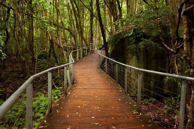 Nastroszony przejście w tropikalny las deszczowy podłoga blisko Katoomba w Nowym Południowym Wa obrazy royalty free