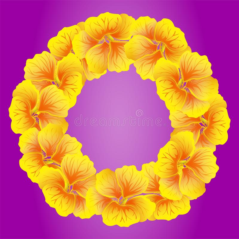 Nasturtium wreath. Wild Yellow flowers. Beautiful Floral circle isolated on bright pink background. Vector illustration.Card stock illustration