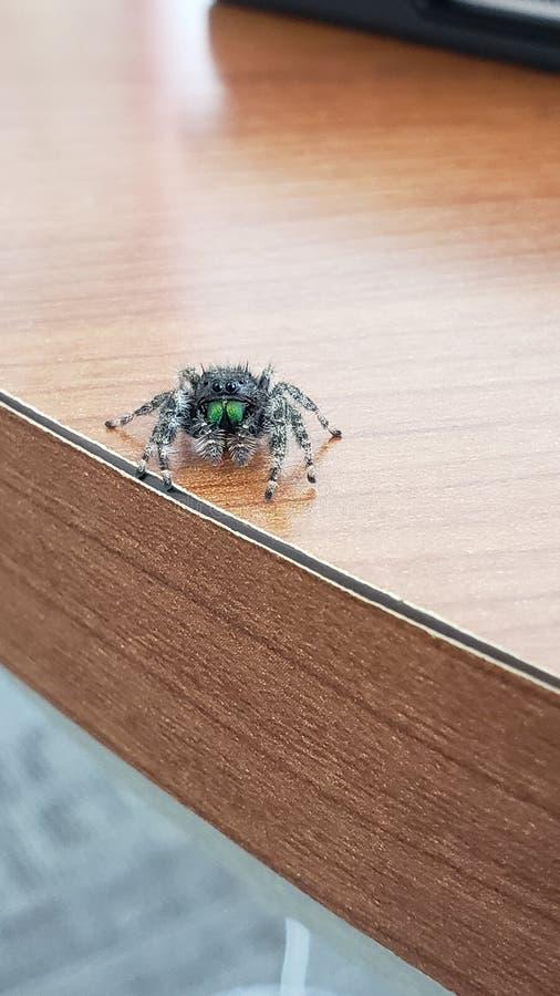 Nasz Życzliwy sklepu pająk fotografia stock