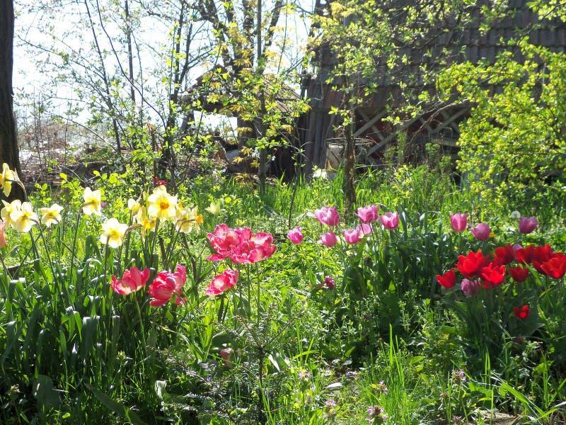 Nasz ogród w wiosny popołudnia świetle słonecznym zdjęcia royalty free