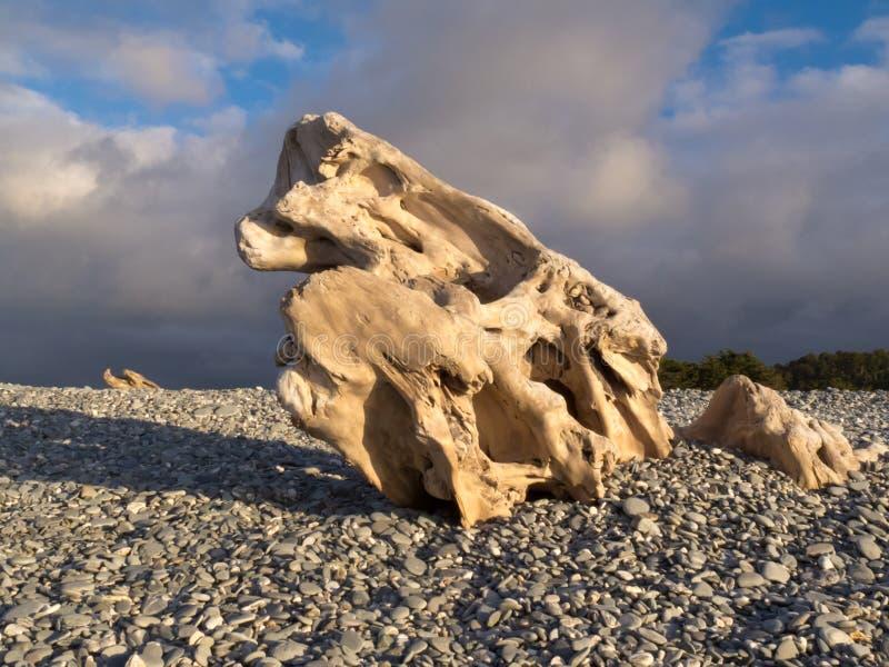Natürlich gemeißelt waterworn Holz auf Pebble Beach lizenzfreies stockfoto