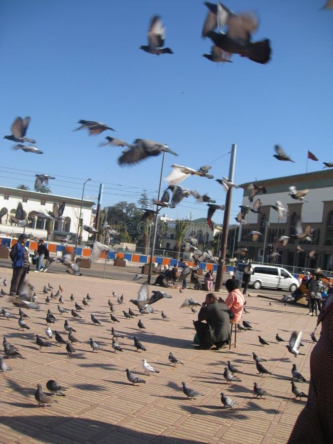 Natürliche Ansicht in Marokko stockfotografie