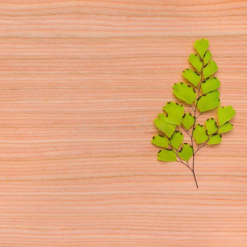 Natürliche Beschaffenheit des Baumhintergrundes mit gestalteter Niederlassung lizenzfreies stockfoto