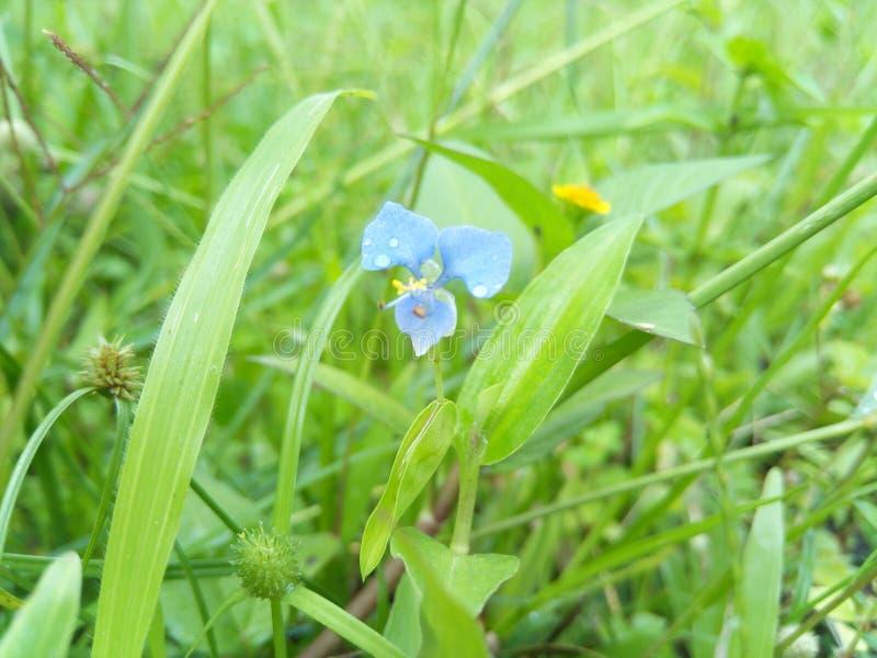 Natürliche Blume lizenzfreies stockbild