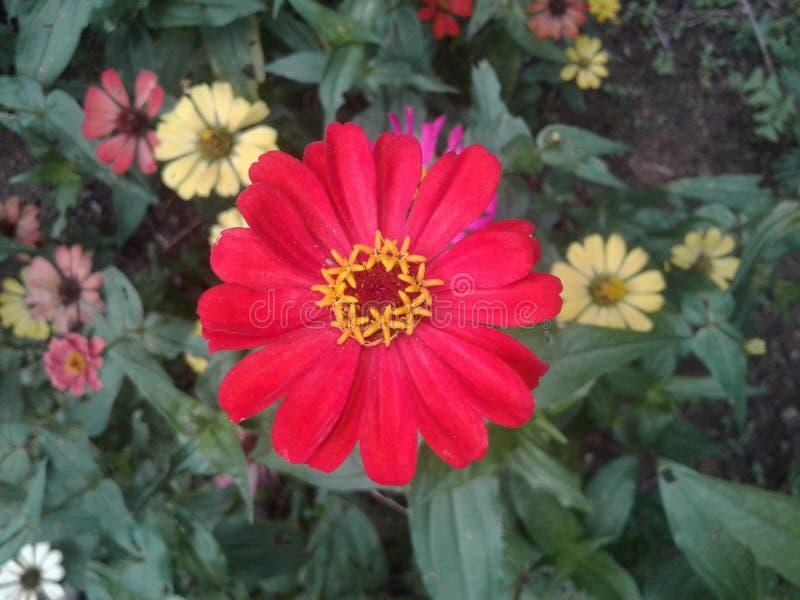 Natürliche Blume in Sri Lanka lizenzfreie stockbilder