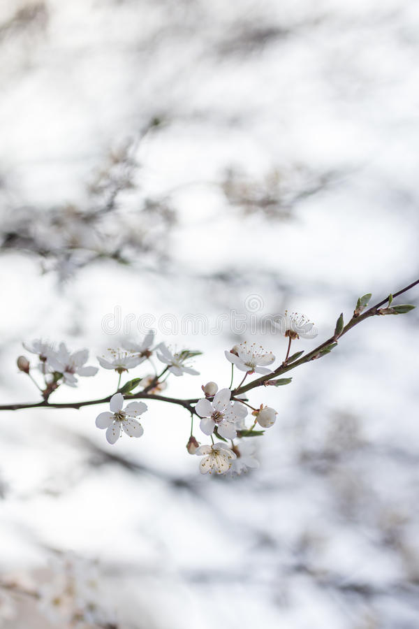Natürliche Blumen stockfotografie