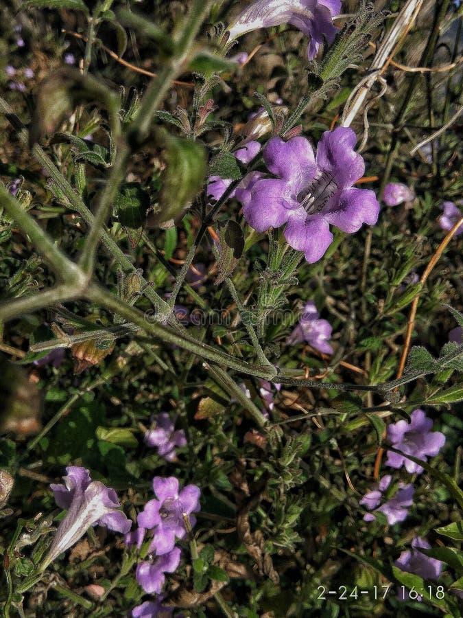 Natürliche Blumenbilder schärften Foto lizenzfreie stockbilder