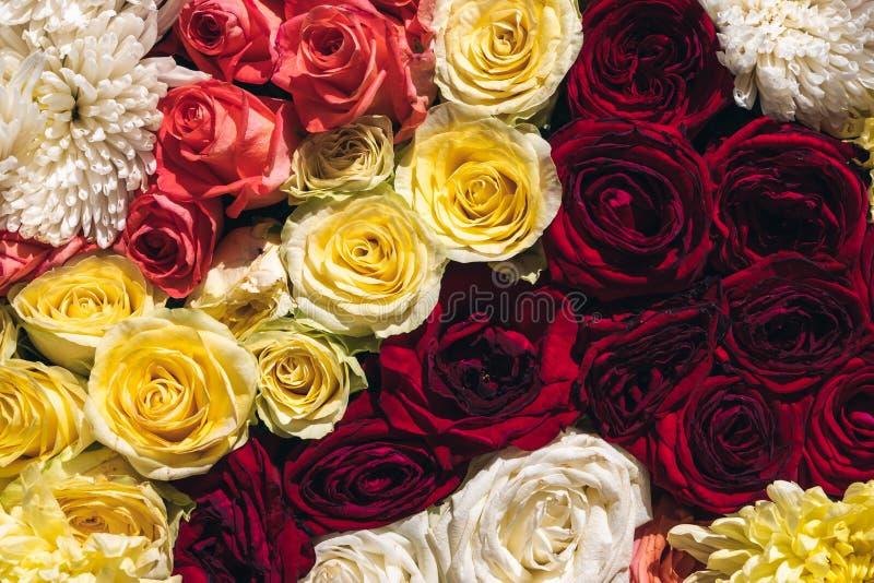 Natürliche bunte Rosen Hintergrund, Abschluss herauf Draufsicht Das Frühlingsblühen senkt stockbilder