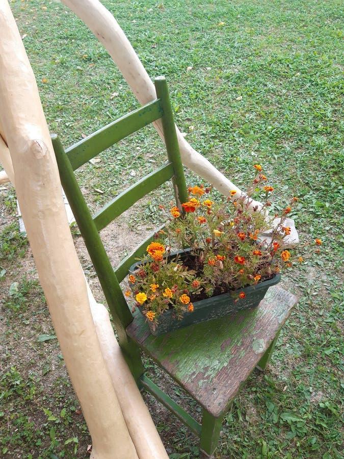 Natürliche Dekoration mit schönen orange Blumen lizenzfreie stockfotos