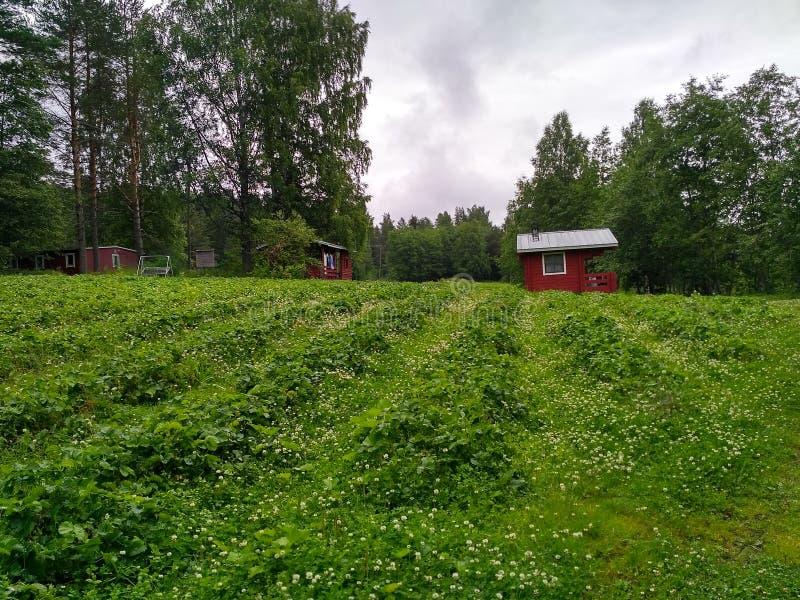 Natürliche Finnland-Erdbeerhölzernes Haus lizenzfreies stockbild