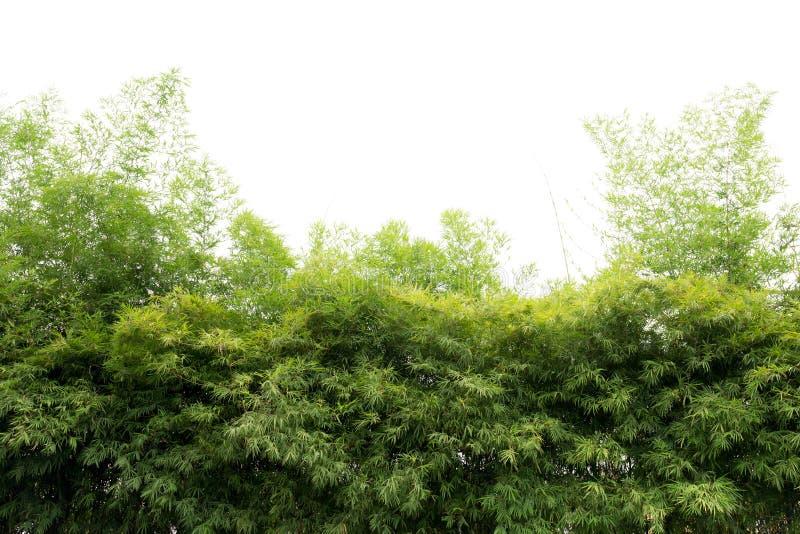 Natürliche grüne Bambuswaldlandschaft lizenzfreie stockbilder
