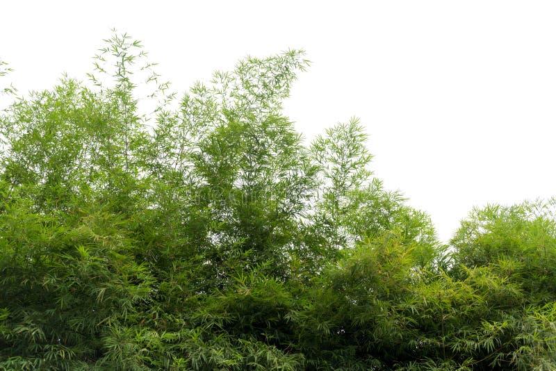 Natürliche grüne Bambuswaldlandschaft lizenzfreies stockbild