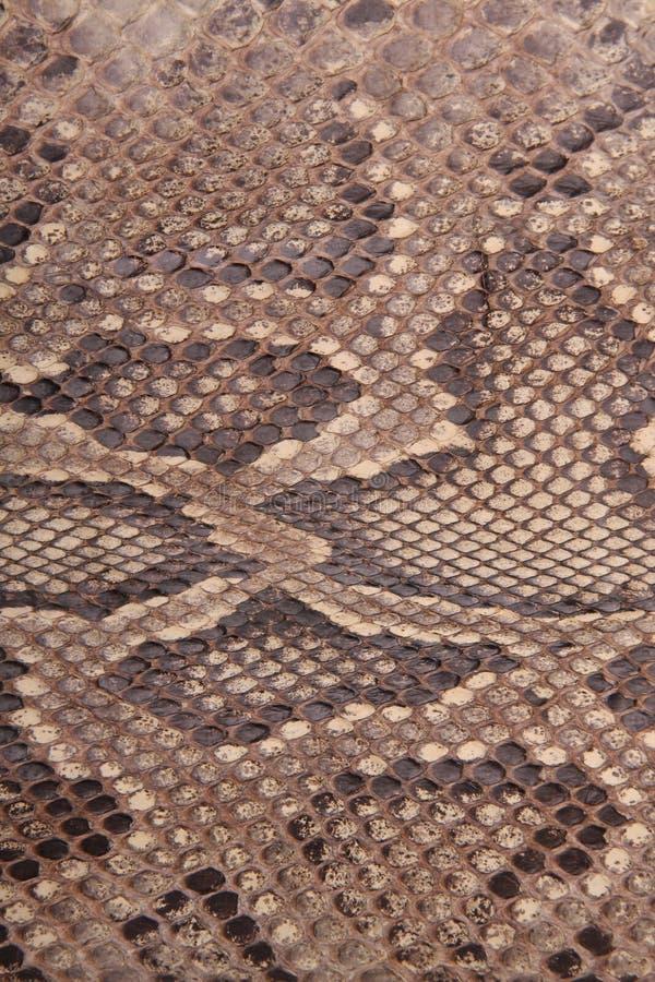 Natürliche Haut einer Pythonschlange lizenzfreies stockbild