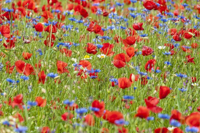 Natürliche Impressionistmalerei geschaffen von den wilden Blumen stockfoto