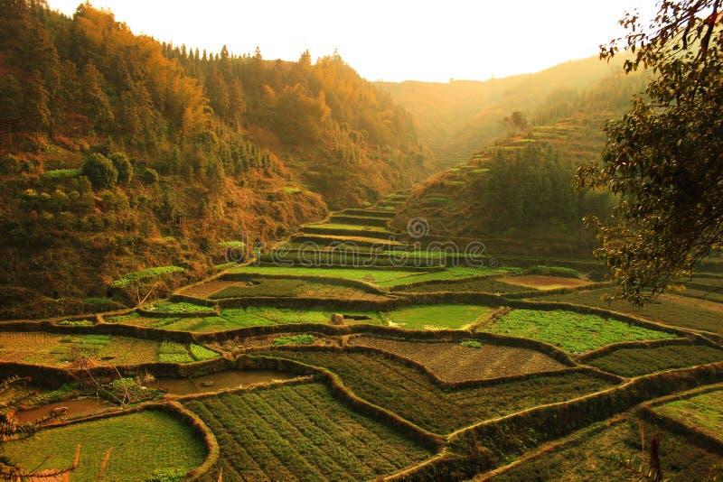 Natürliche Landschaft stockbilder