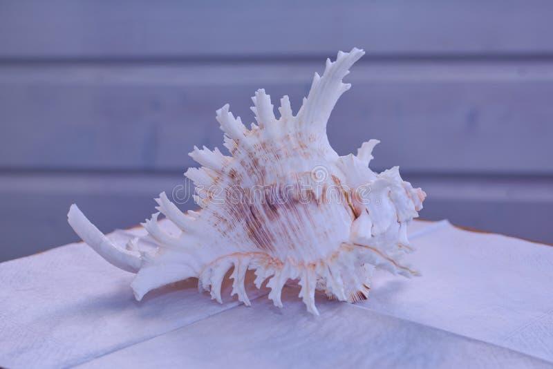 Natürliche Muschel auf weißer Serviette stockfotos