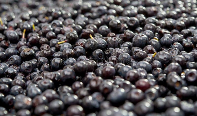 Natürliche Nahaufnahme des Hintergrundes Nahrungsmittelblaubeer lizenzfreie stockbilder