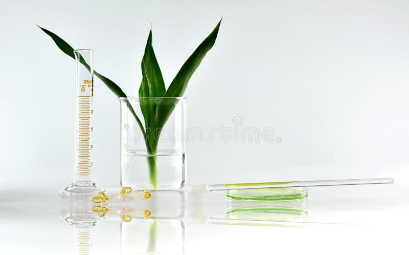 Natürliche organische Botanik und wissenschaftliche Glaswaren, alternative Krautmedizin, natürliche Hautpflegeschönheitsprodukte stockbild