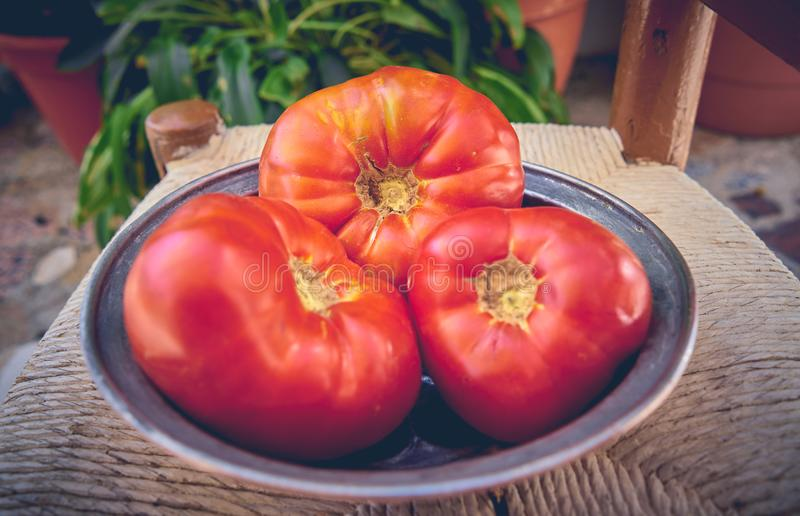 100% natürliche organische Tomaten vom Garten Große nicht-transgene Tomaten lizenzfreies stockbild