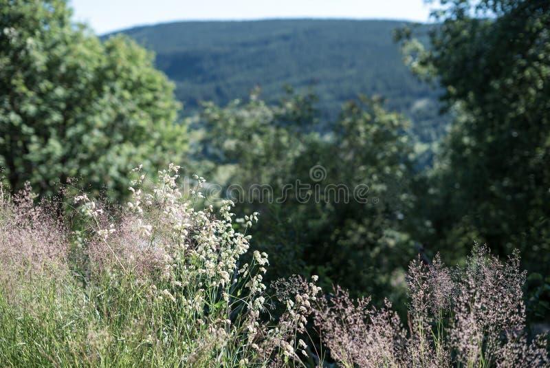 Natürliche und ländliche violette Wildflowers im Sonnenlicht, die in einem Hinterhof auf der Landschaftssommerzeit mit Bäumen blü lizenzfreie stockfotografie