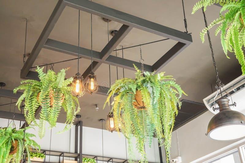 Natürliche und WeinleseGlühlampe Innen mit hängendem Farntopf im Café für Entspannung lizenzfreie stockfotografie