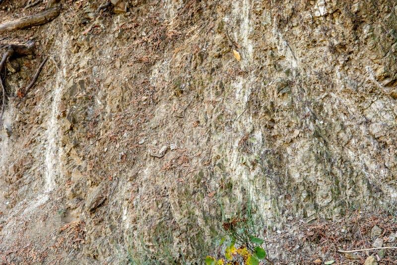 Natürliche Wandbeschaffenheit mit Boden, Steinen und Baumwurzeln Nahaufnahme, Hintergrund stockfoto