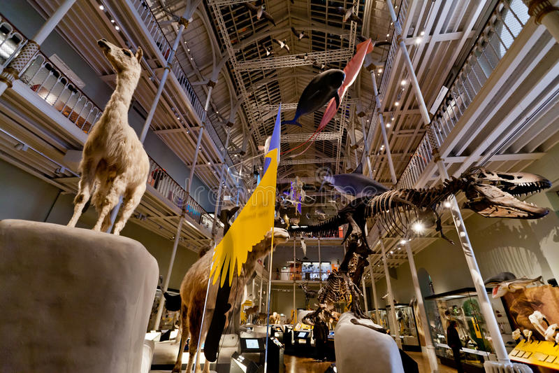Natürliche Weltgalerie-nationales Museum von Schottland lizenzfreie stockbilder