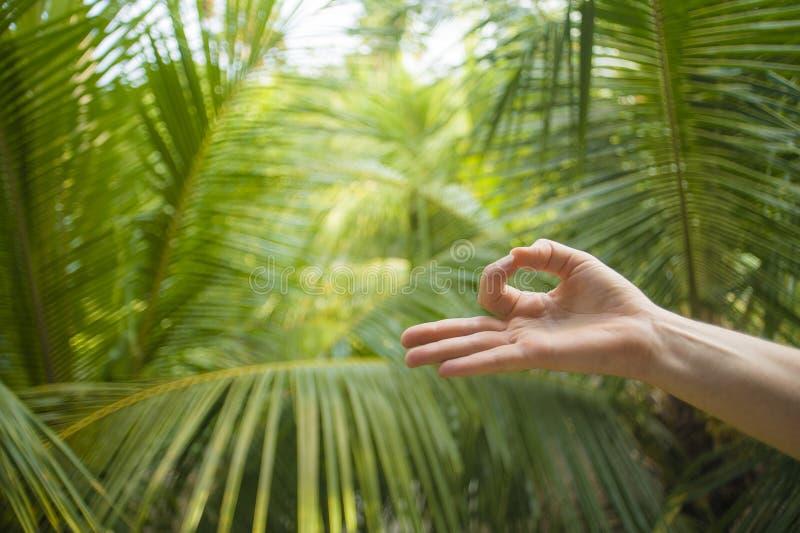 Natürlicher Abschluss herauf die Hand der Frau Yoga mudra in der gyan Fingerposition herein lokalisiert auf schönem tropischem Na stockbilder