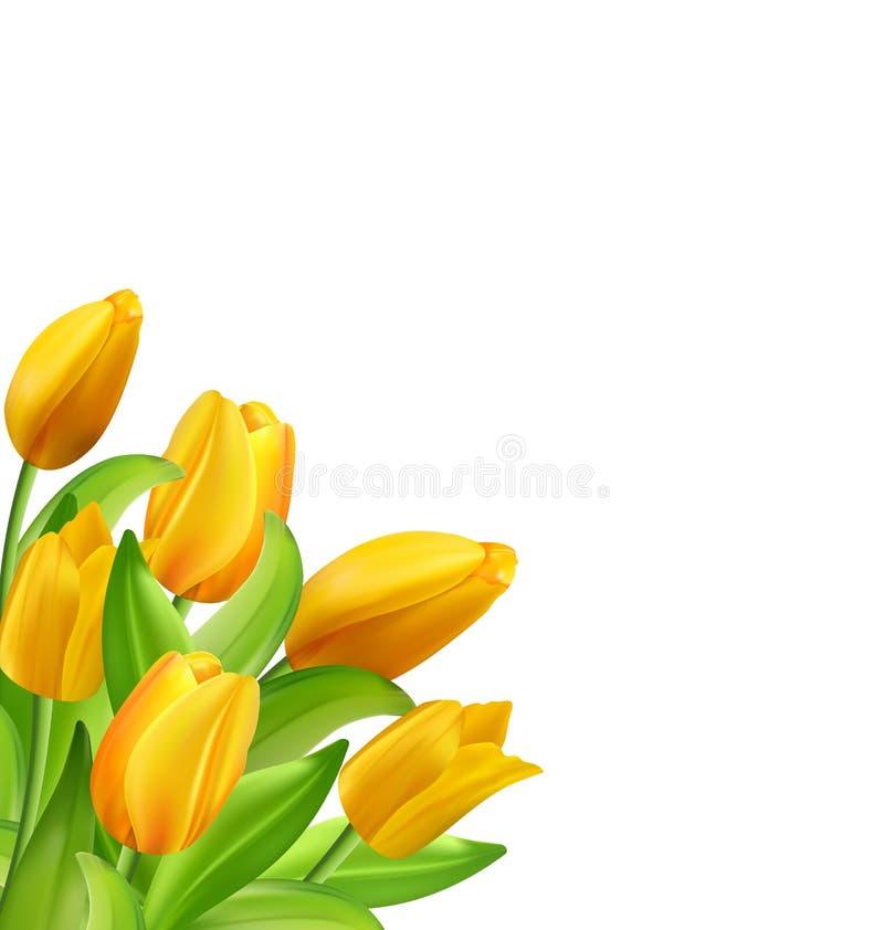 Natürlicher Blumenstrauß mit gelben Tulpen-Blumen lizenzfreie abbildung